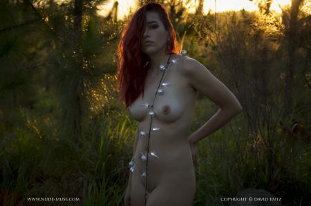 Aims - Christmas Tree